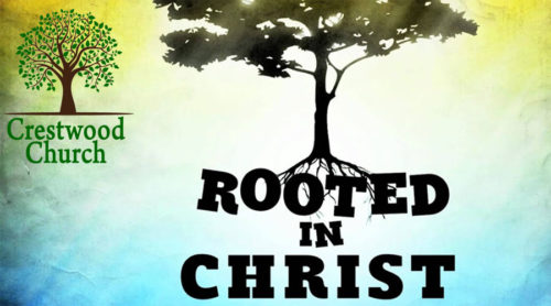 Rooted in Christ: Radical Endurance